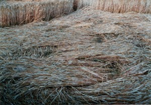 Fig.11 - Ground shot of weave, Bishops Cannings